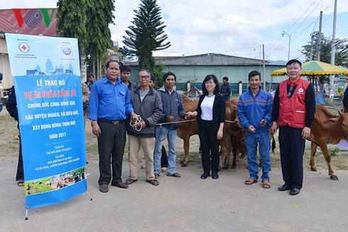 Tặng bò cho nông dân nghèo tỉnh Lâm Đồng - Ảnh 3.