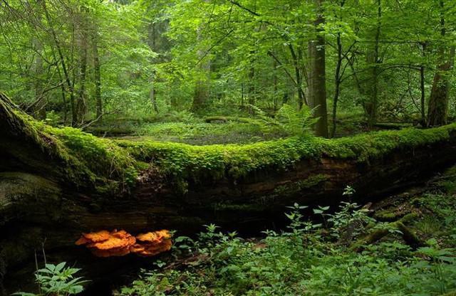 10 công viên quốc gia ở châu Âu khiến bạn phải sững sờ vì quá đẹp - Ảnh 4.