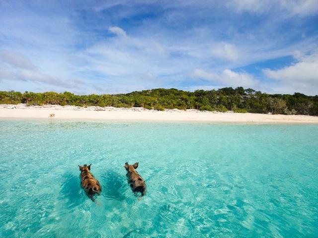 9 bãi biển nước trong nhất thế giới - Ảnh 7.