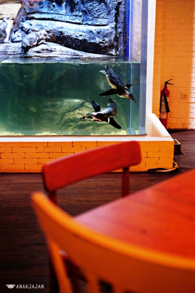 Nhà hàng chim cánh cụt thú vị tại Indonesia - Ảnh 13.