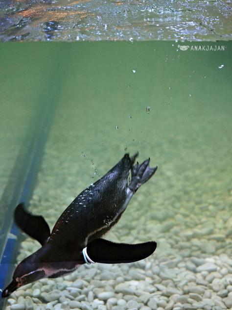 Nhà hàng chim cánh cụt thú vị tại Indonesia - Ảnh 11.