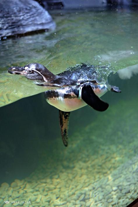 Nhà hàng chim cánh cụt thú vị tại Indonesia - Ảnh 14.