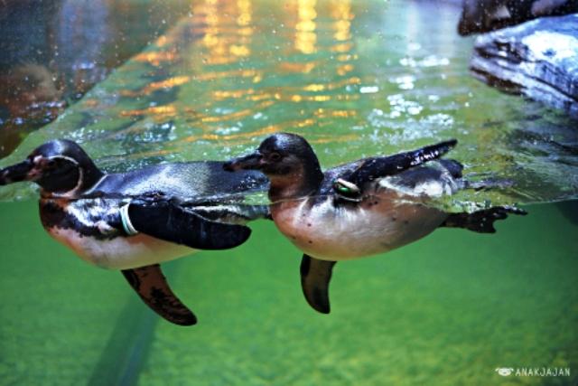 Nhà hàng chim cánh cụt thú vị tại Indonesia - Ảnh 1.