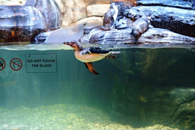 Nhà hàng chim cánh cụt thú vị tại Indonesia - Ảnh 7.