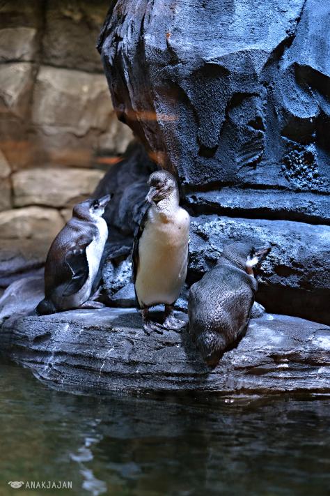 Nhà hàng chim cánh cụt thú vị tại Indonesia - Ảnh 17.