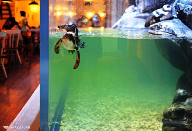 Nhà hàng chim cánh cụt thú vị tại Indonesia - Ảnh 9.