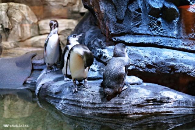 Nhà hàng chim cánh cụt thú vị tại Indonesia - Ảnh 3.