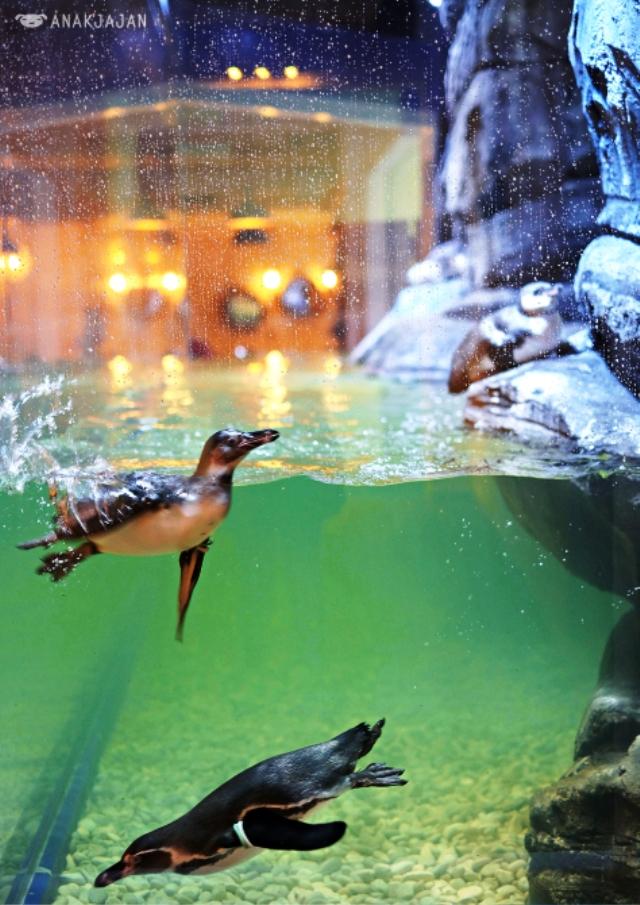 Nhà hàng chim cánh cụt thú vị tại Indonesia - Ảnh 12.