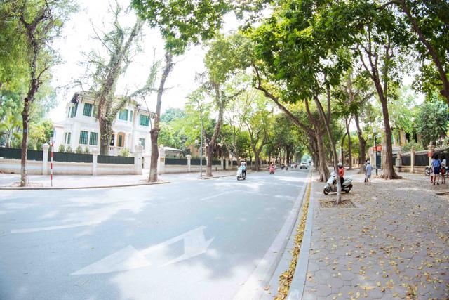 Con đường lãng mạn nhất Hà Nội đẹp ngỡ ngàng mùa cây thay lá - ảnh 12