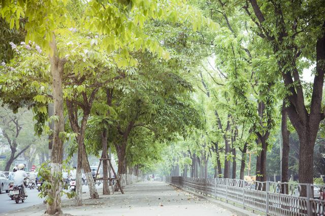 Ngỡ ngàng vẻ đẹp của Hà Nội trong tiết giao mùa tháng 4 - Ảnh 14.