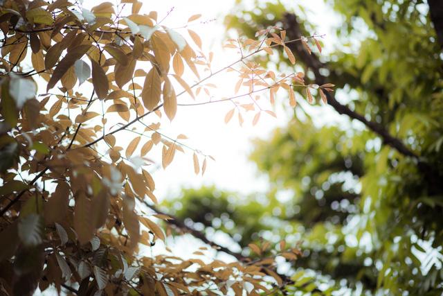 Ngỡ ngàng vẻ đẹp của Hà Nội trong tiết giao mùa tháng 4 - Ảnh 13.