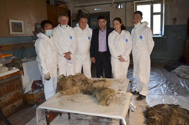 Xác tê giác chôn vùi 34.000 năm dưới lớp băng tuyết còn nguyên lông và sừng - Ảnh 3.