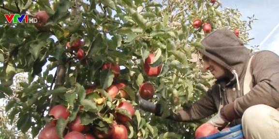Cách bảo quản nông sản sau thu hoạch của nông dân châu Âu - Ảnh 1.