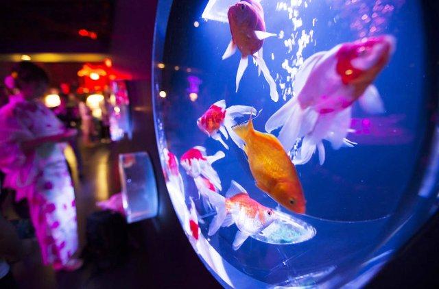 Triển lãm thủy cung nghệ thuật độc đáo ở Tokyo, Nhật Bản - ảnh 5