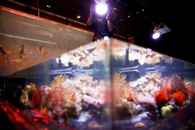 Triển lãm thủy cung nghệ thuật độc đáo ở Tokyo, Nhật Bản - ảnh 11