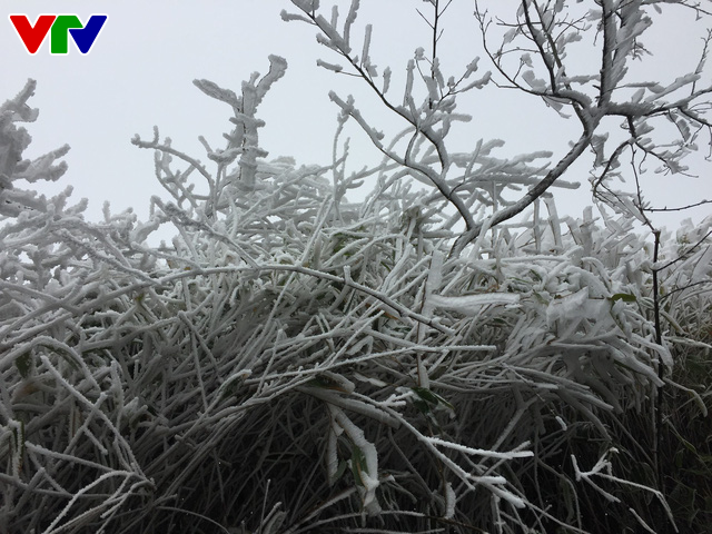 Băng tuyết tuyệt đẹp ở Sa Pa khiến du khách thích thú - Ảnh 2.