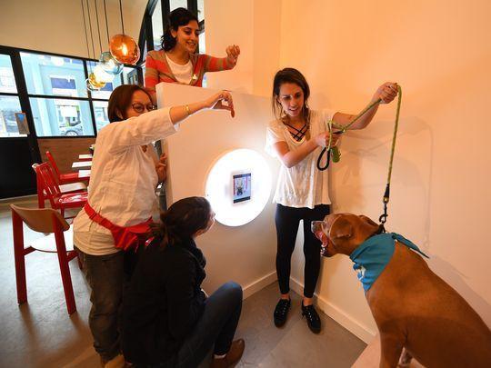 Quán cà phê dành cho cún cưng đầu tiên tại New York - Ảnh 3.