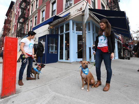 Quán cà phê dành cho cún cưng đầu tiên tại New York - Ảnh 2.