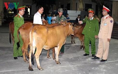 Đối tượng chuyên trộm trâu bò của người dân sa lưới - Ảnh 2.