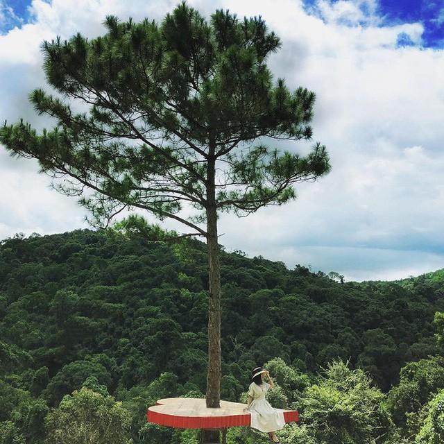 """Dân du lịch háo hức """"check-in"""" cây thông sống ảo độc nhất vô nhị ở Đà Lạt - Ảnh 2."""