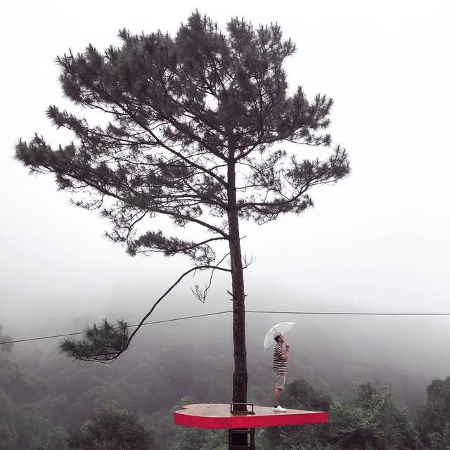 """Dân du lịch háo hức """"check-in"""" cây thông sống ảo độc nhất vô nhị ở Đà Lạt - Ảnh 3."""