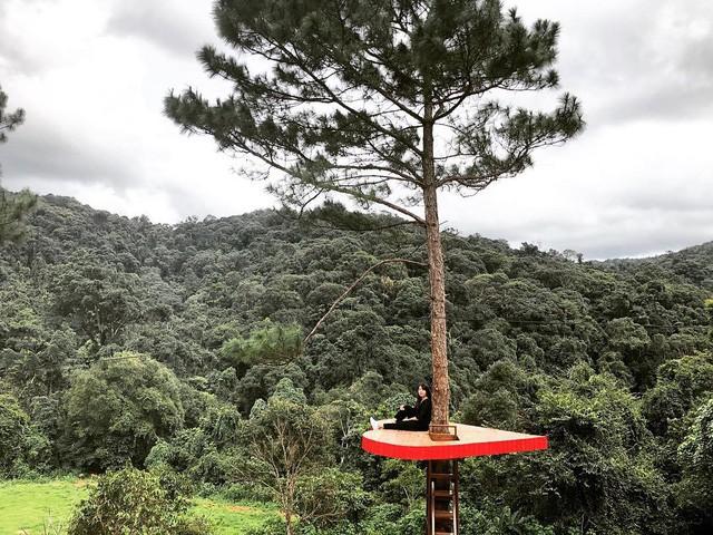 """Dân du lịch háo hức """"check-in"""" cây thông sống ảo độc nhất vô nhị ở Đà Lạt - Ảnh 4."""