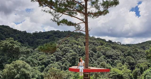 """Dân du lịch háo hức """"check-in"""" cây thông sống ảo độc nhất vô nhị ở Đà Lạt - Ảnh 5."""