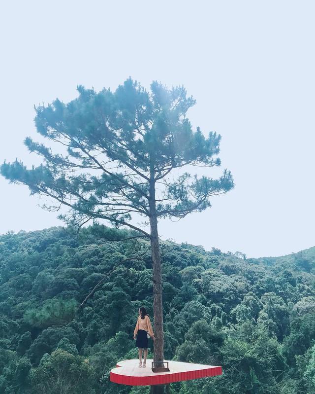 """Dân du lịch háo hức """"check-in"""" cây thông sống ảo độc nhất vô nhị ở Đà Lạt - Ảnh 6."""