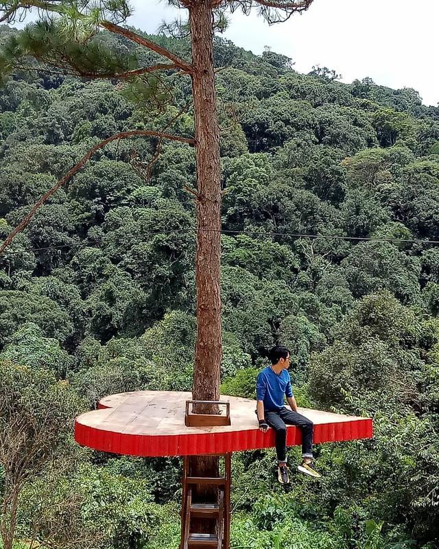 """Dân du lịch háo hức """"check-in"""" cây thông sống ảo độc nhất vô nhị ở Đà Lạt - Ảnh 8."""