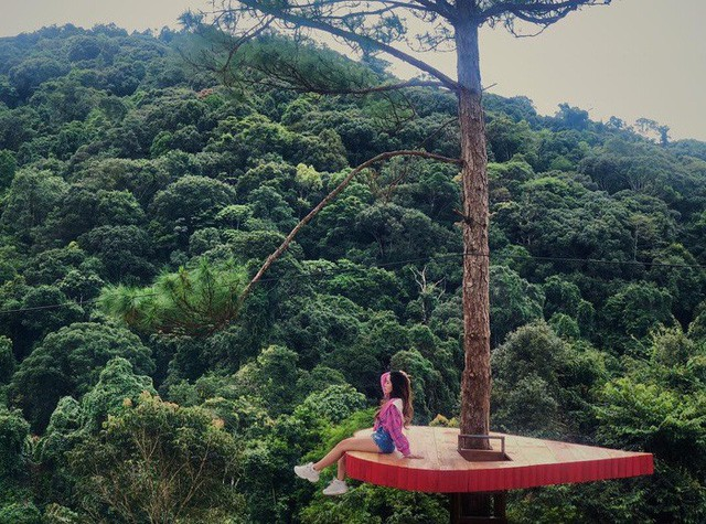 """Dân du lịch háo hức """"check-in"""" cây thông sống ảo độc nhất vô nhị ở Đà Lạt - Ảnh 9."""