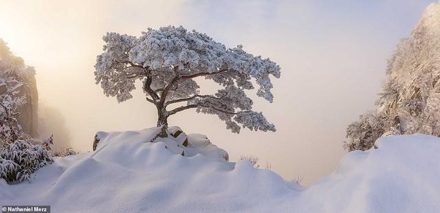 Những bức ảnh đẹp nhất giải thưởng Nhiếp ảnh quốc tế Epson - Ảnh 20.