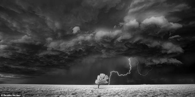 Những bức ảnh đẹp nhất giải thưởng Nhiếp ảnh quốc tế Epson - Ảnh 21.