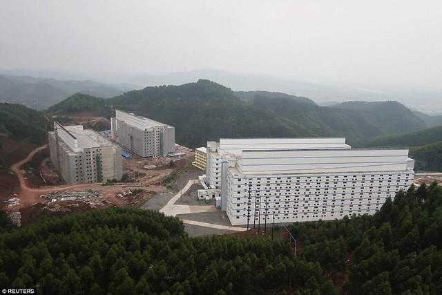 Bên trong khách sạn cao 7 tầng ở Trung Quốc chuyên để... chăn lợn - Ảnh 2.