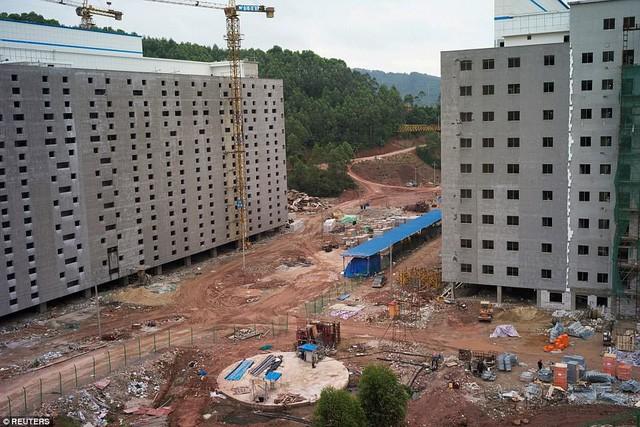 Bên trong khách sạn cao 7 tầng ở Trung Quốc chuyên để... chăn lợn - Ảnh 3.