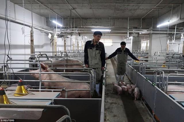 Bên trong khách sạn cao 7 tầng ở Trung Quốc chuyên để... chăn lợn - Ảnh 5.