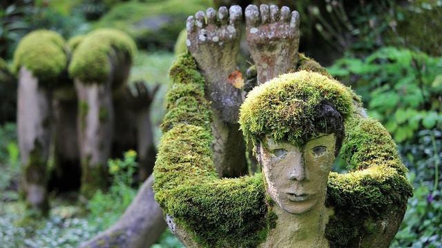 Khu rừng ma mị khiến ai bước vào cũng rợn tóc gáy - Ảnh 5.