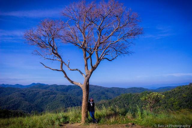 Những đồi cỏ xanh bạt ngàn trên cung đường trekking đẹp nhất Việt Nam - Ảnh 5.