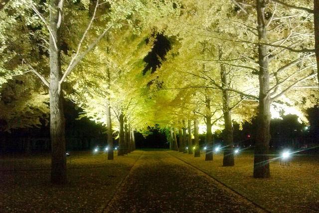Những địa điểm ngắm lá vàng lá đỏ nổi tiếng nhất nước Nhật - Ảnh 2.