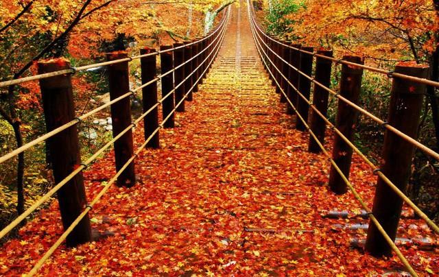 Những địa điểm ngắm lá vàng lá đỏ nổi tiếng nhất nước Nhật - Ảnh 3.
