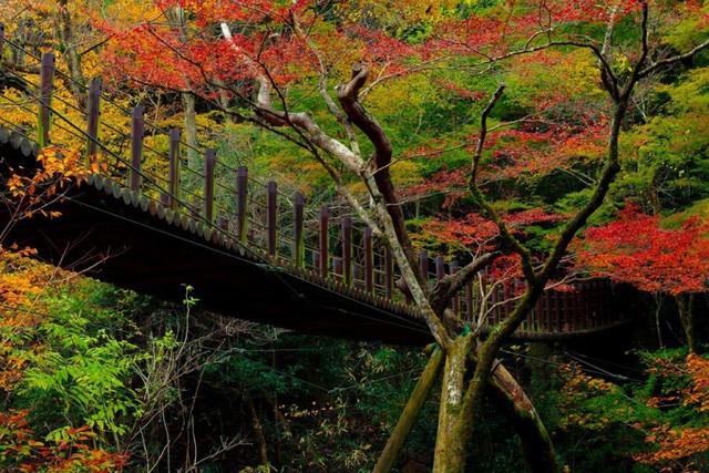 Những địa điểm ngắm lá vàng lá đỏ nổi tiếng nhất nước Nhật - Ảnh 4.