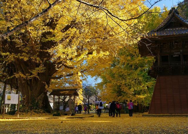 Những địa điểm ngắm lá vàng lá đỏ nổi tiếng nhất nước Nhật - Ảnh 5.