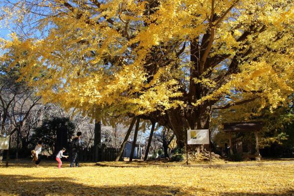 Những địa điểm ngắm lá vàng lá đỏ nổi tiếng nhất nước Nhật - Ảnh 6.