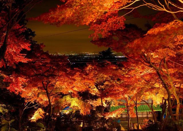 Những địa điểm ngắm lá vàng lá đỏ nổi tiếng nhất nước Nhật - Ảnh 7.