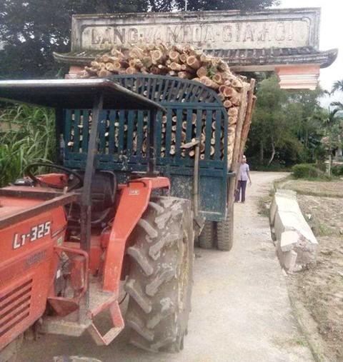 Xe chở gỗ, khiêng luôn cổng chào của làng là có thật - Ảnh 1.