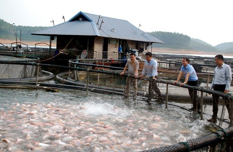Huyện Yên Bình (Yên Bái): Những bước tiến trong phát triển kinh tế - Ảnh 1.