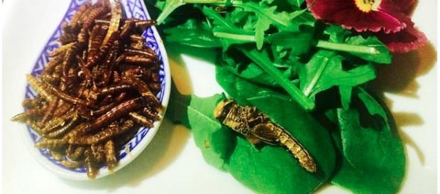 Trải nghiệm bữa tối côn trùng - Ảnh 2.