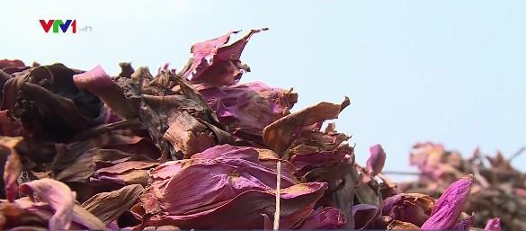 Tạo màu lụa từ hoa súng - công đoạn đặc biệt của nghề dệt tại Thái Lan - ảnh 1