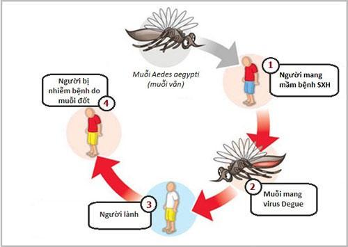 Sốt xuất huyết Dengue - Những kiến thức không thể bỏ qua - Ảnh 1.
