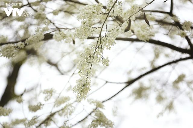 Hà Nội - Có một mùa thay lá cực tình - Ảnh 1.