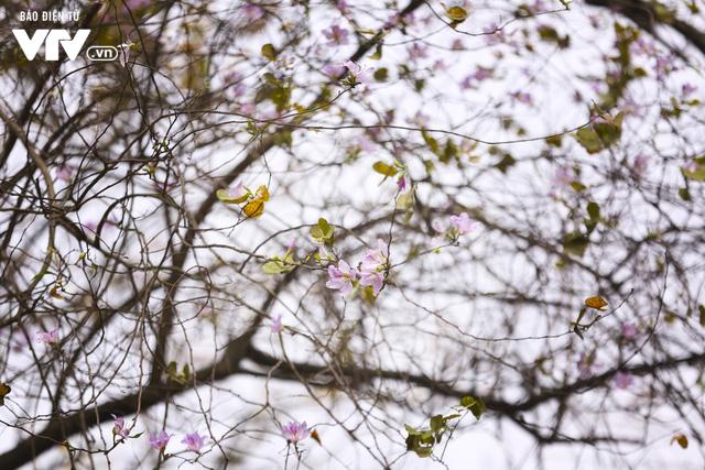 Hà Nội - Có một mùa thay lá cực tình - Ảnh 6.